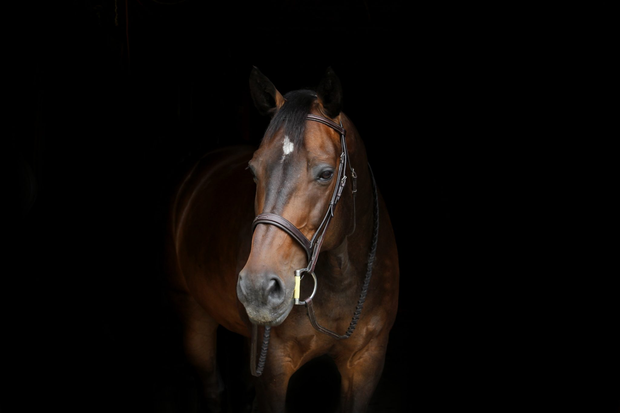 Broadcast PR: Brooke - Every Horse Remembered