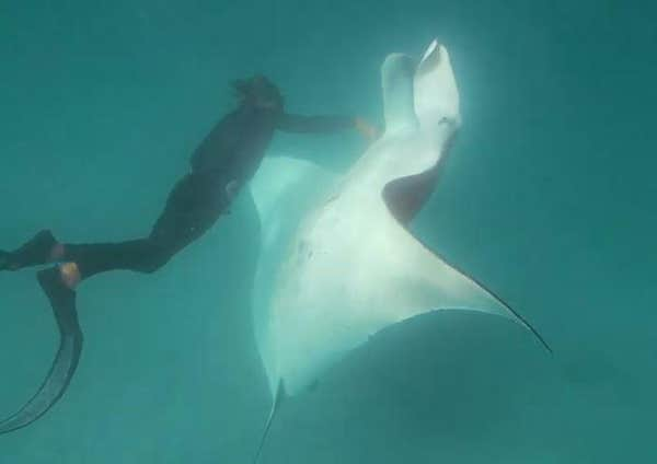 Press Sell-In: Tourism Western Australia - Freckles the Manta Ray